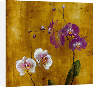 Orchid Bloom I by Georgie