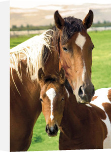 Horses - Mare and Foal by Anonymous