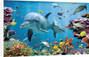 Tropical Underwater - Ocean by Anonymous