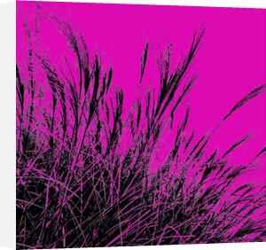 Grass (magenta), 2011 by Davide Polla