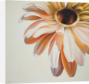 Warm Flower by Carolina Alotus