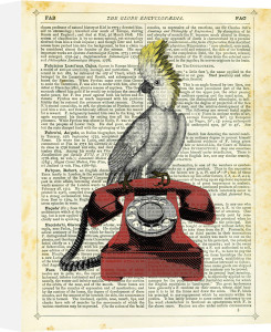 Cockatoo on Telephone by Marion McConaghie