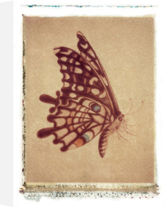 Dancing Butterfly by Deborah Schenck
