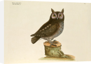 T. 7 by Mark Catesby