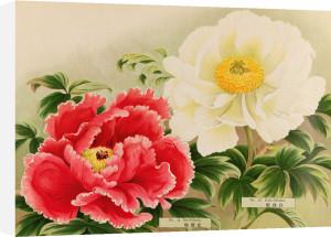 No. 15 Kin-Fukurin and No. 16 Haku-Shiuden by The Yokohama Nursery Co Ltd