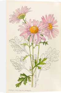 Plate 9566 by Lilian Snelling and Stella Ross Craig