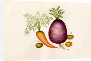 Brassica rapa, Daucus carota, Solanum lycopersicum by Wang Lui Chi