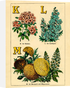 K for Kalmia, L for Larkspur, M for Marigold and Mignonette by John Dicks