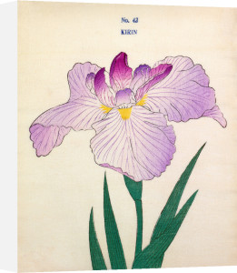 Plate 43 by The Yokohama Nursery Co Ltd