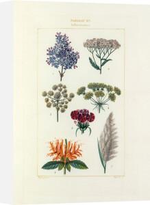 Tableau XV, Inflorescence by Pierre Jean Francois Turpin