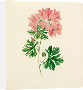 Plate 37 by Lydia Penrose