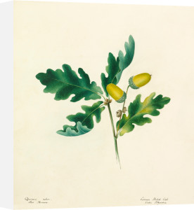 Plate 45 by Lydia Penrose
