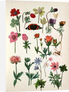 Plate 12 by Pieter van Kouwenhoorn