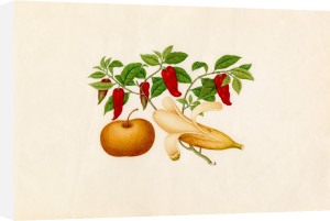 Capsicum annuum, Musa x paradisiaca and Pyrus pyrifolia by Wang Lui Chi