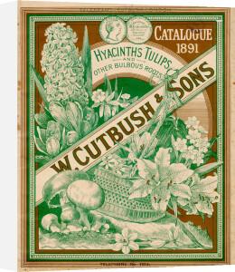 W Cutbush and Sons Catalogue 1891 by W Cutbush