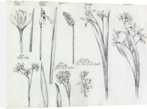Flowering Bulbs by Alice Bickham
