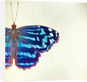 Blue on Blue by Robert Cadloff