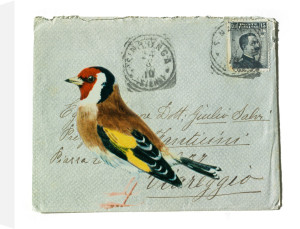 Goldfinch by Deborah Schenck