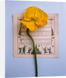 Music and Yellow Poppy by Deborah Schenck