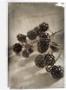Mures Sauvages by Deborah Schenck