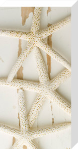 White Starfish on Wood by Deborah Schenck