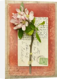 Yeats by Deborah Schenck