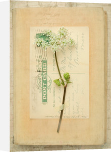Byron by Deborah Schenck