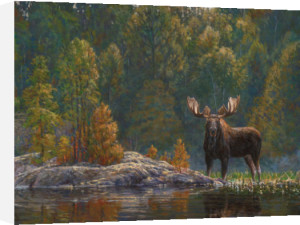 North Country Moose by Bruce Miller
