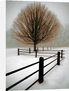 Solitude by David Lorenz Winston