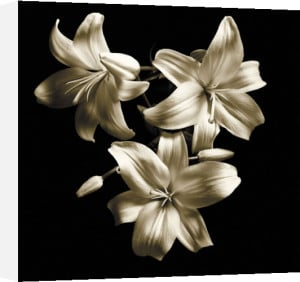 Three Lilies by Michael Harrison