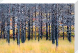 Magic Wood by Fortunato Gatto