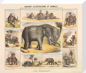 The Elephant by Benjamin Waterhouse Hawkins