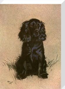 Cocker Spaniel, 1928 by Cecil Aldin