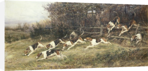 The Blankney Hounds, 1895 by Heywood Hardy