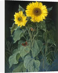 Sunflowers by Niels Fristrup