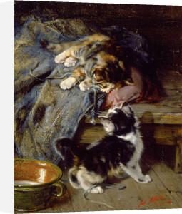 Kittens at Play by Julius Adam