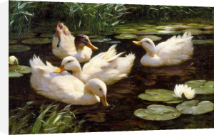 The Lily Pond by Alexander Max Koester