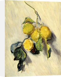 Brache de Citronnier, 1884 by Claude Monet
