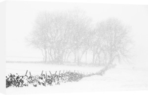Winter Wildness by Doug Chinnery