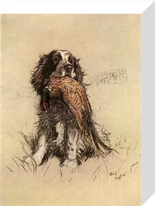 Springer Spaniel, 1928 by Cecil Aldin