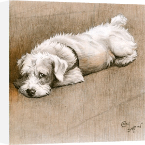 Sealyham Terrier, 1932 by Cecil Aldin