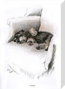 Dachshund puppy, 1930 by Cecil Aldin
