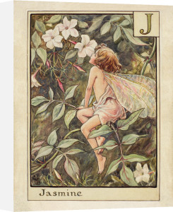Jasmine Fairy by Cicely Mary Barker