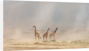 Weathering the Amboseli Dust Devils by Jeffrey C. Sink