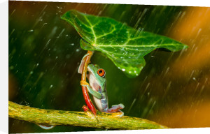 Ohh Noo :( It's Raining by Kutub Uddin