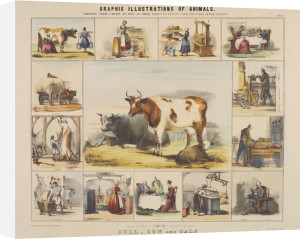 The Bull, Cow and Calf by Benjamin Waterhouse Hawkins