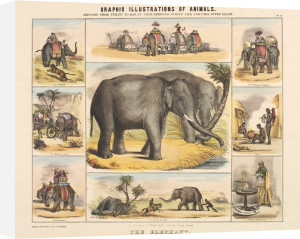 The Elephant by Benjamin Waterhouse Hawkins