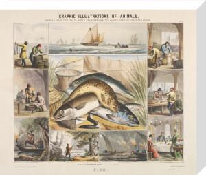 Fish by Benjamin Waterhouse Hawkins
