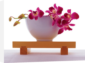 Magenta Orchid in White Bowl by Anonymous