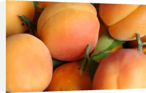 Apricots by Richard Osbourne